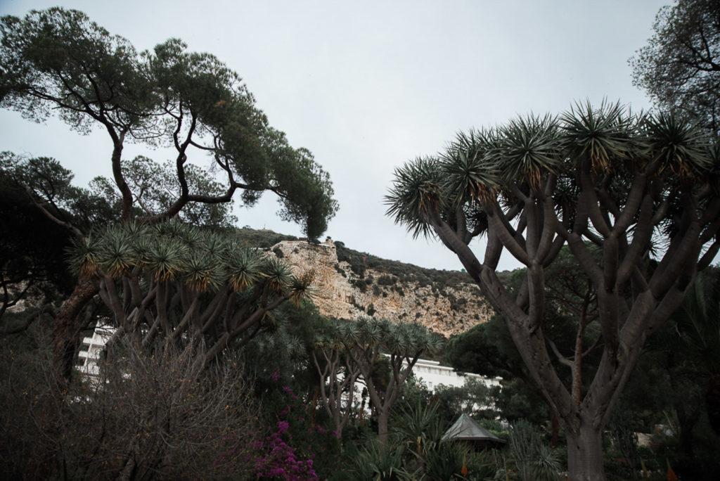 Vestuvių fotosesija Gibraltare
