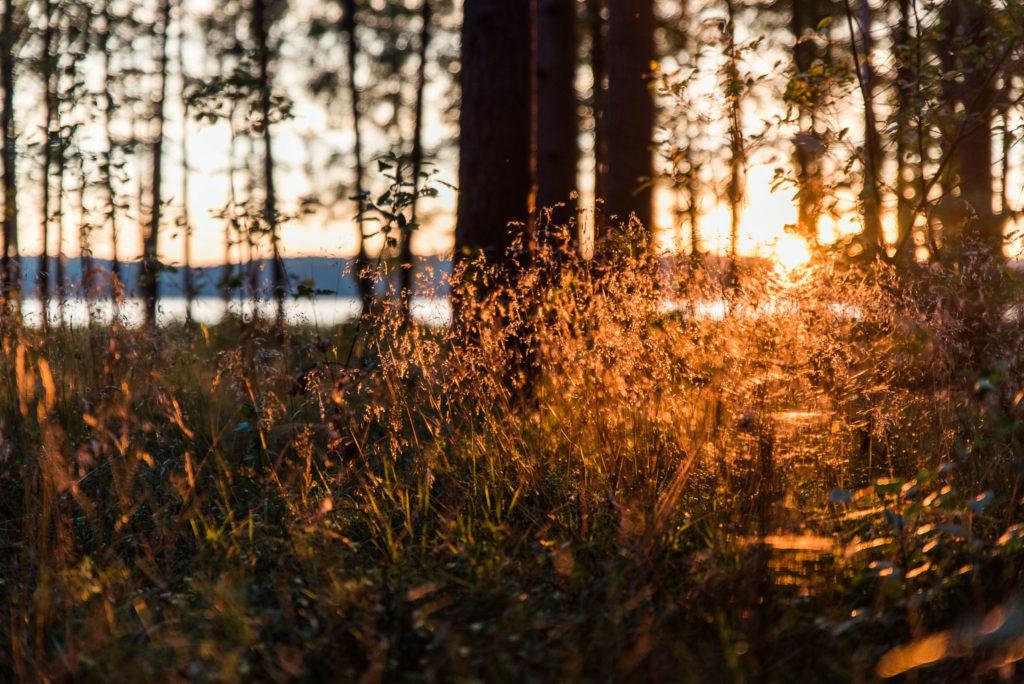 Vestuvių fotosesija Lietuvoje